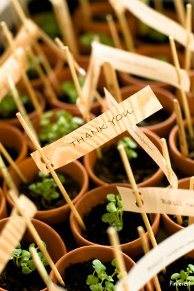 mariage-vert-ecolo-cadeau